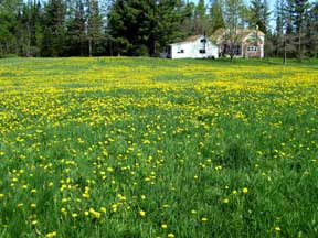 photo of a field